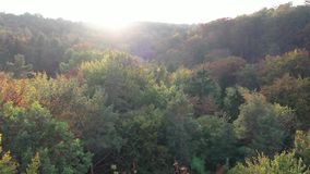 Flying above autumn forest aerial drone view from, dji stock video