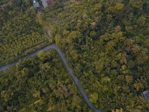 Flying above Forest with houses, top view of lush trees.  Royalty Free Stock Image