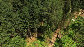 Flying Above Forest At Summer stock video footage