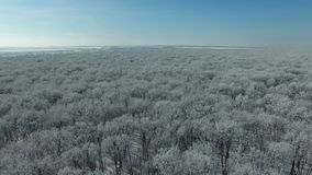 Flying above the forest in winter. Aerial video of a winter forest at sunny day. Drone moving backwards at high altitude. 4K Aerial stock footage shot at winter stock video