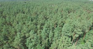 Flying above the green coniferous forest stock video footage