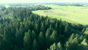 Flying above green forest at summer time stock video