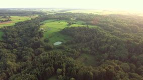 Flying above green forest at summer time stock video footage