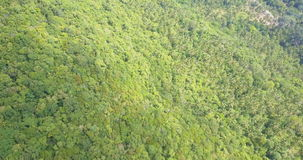 Flying Above Lush Green Tropical Rainforest stock video footage