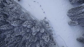 Flying above pine trees in winter stock footage