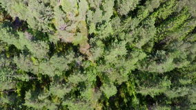 Flying above pine woods in summer stock footage