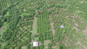 Flying above tree area stock video