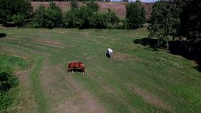 Flying Above The Trees on The Quadrocopters. Phantom 3 Professional 4K stock video