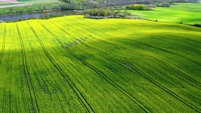 Flying above yellow and green rape fields in Poland stock footage