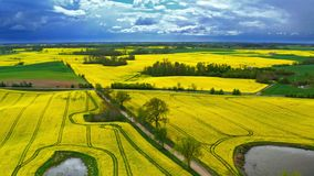 Flying above yellow rape fields in cloudy day, Poland stock video footage