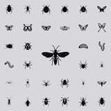 flying ant icon. insect icons universal set for web and mobile stock illustration