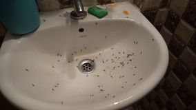 Flying ant in the washbasin