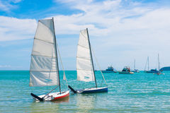 Flying ants sailing on the sea Stock Photography
