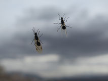 Flying ants on window Royalty Free Stock Images