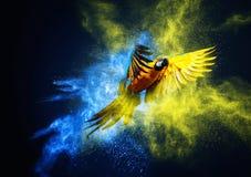 Flying Ara parrot stock image