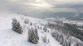 Flying around a frozen very beautiful tree. Winter tale. Landscape stock video