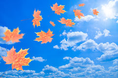 Flying autumn leaves against the blue sky Royalty Free Stock Photo