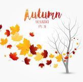 Flying autumn leaves background Stock Images