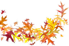 Flying Autumn Leaves Stock Photography