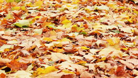 Flying autumn leaves stock video