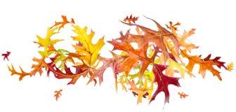 Flying Autumn Oak Leaves Stock Photography