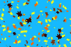 Flying autumnal leaves Stock Photography