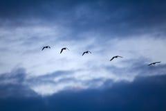 Flying away Stock Image