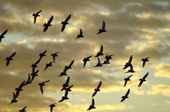 Flying away. Flying pigeons against evening sky Stock Photo