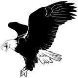 Flying Bald Eagle. Black Illustration, Vector vector illustration