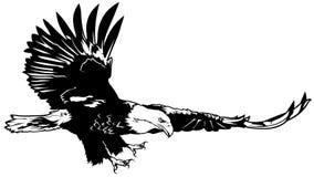 Flying Bald Eagle. Black Outline Illustration, Vector vector illustration
