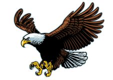 Flying bald eagle in detailed style. Vector of flying bald eagle in detailed style royalty free illustration