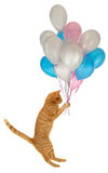 Flying balloon cat Stock Image