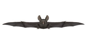 Flying bat - 3D render Royalty Free Stock Image