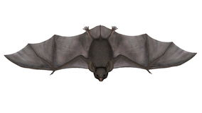 Flying bat - 3D render Royalty Free Stock Photo