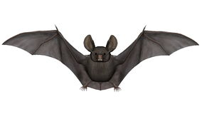 Flying bat - 3D render Royalty Free Stock Photography