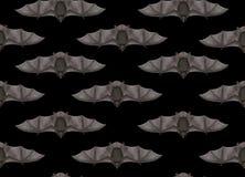 Flying bat in seamless black background - 3D render Stock Images