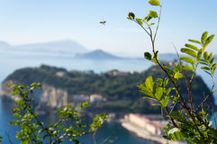 Flying bee. A flying bee with the view of Nisida and Miseno, Naples, Italy Stock Image