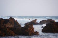 Bird. A flying big white bird at the beach stock photos
