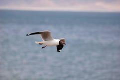 Flying Bird Royalty Free Stock Photo