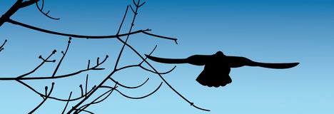 The flying bird. Silhouette of the flying pigeon on a background of the blue sky Vector Illustration
