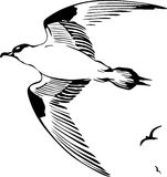 Flying bird. This image is a black and white vector illustration of flying bird  and can be scaled to any size without loss of resolution, can be variated and Royalty Free Stock Image