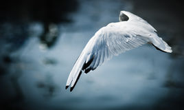 Flying bird stock photo
