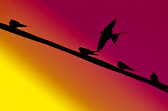 Flying Bird Background Royalty Free Stock Images