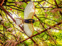 Flying bird on the background of  pink wisteria trellis Royalty Free Stock Photos
