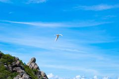 The flying bird in beautiful blue sky.  Royalty Free Stock Photography