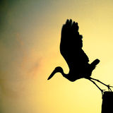 Flying Bird for Bird's Life in sunrise. A bird is flying for food in sunrise Stock Images