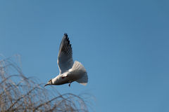 Flying Bird. On the Blue Sky Stock Photo