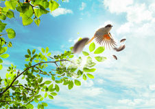 The flying bird. The bird flies to the sky through green branches and leaves Stock Photo