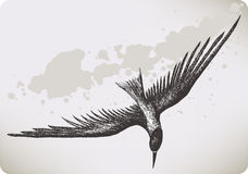Flying bird, hand-drawing. Vector illustration. Stock Image