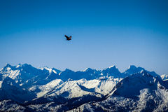 Flying bird in the mountains royalty free stock photo
